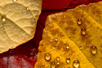 Fall colors - image #310711 gratis