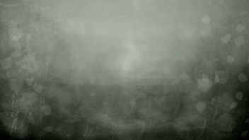 into the mist- free texture - image gratuit #312211