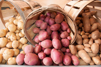 Potatoes - image gratuit #317111