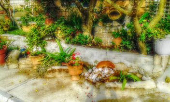 Potted gardens - Free image #318921