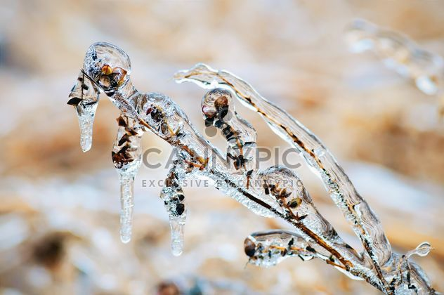 Branch covered with ice - Free image #327311