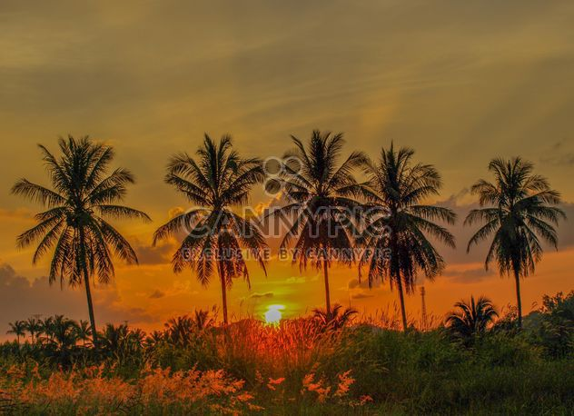 Sunset on a field - Free image #328131