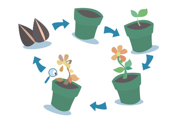 Plant Growth Cycle Vector Set - vector gratuit #329501