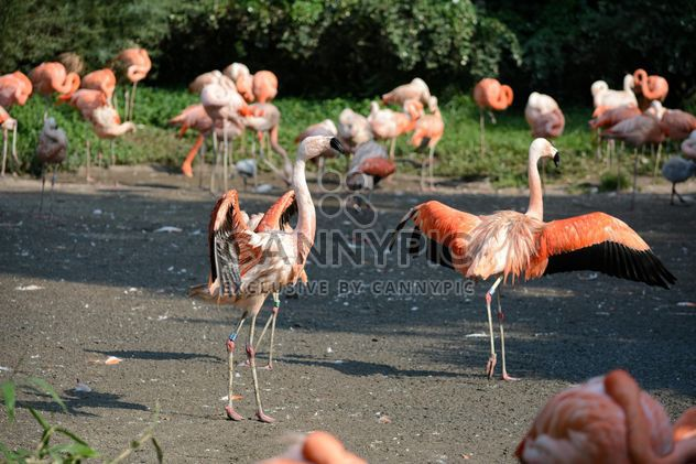 Flamingos in park - Free image #329921