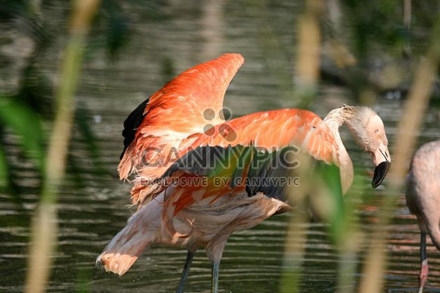 Flamingo in park - Free image #329931