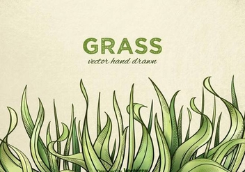 Free Hand Drawn Grass Vector - vector gratuit #330041