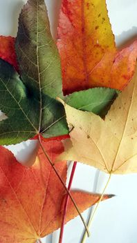 Autumn foliage - Free image #330951