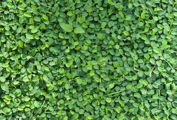 Close up of Green foliage - бесплатный image #330961