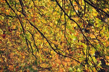 Autumn foliage - Free image #331011