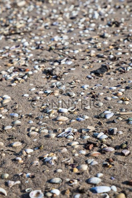 seashells on a sandy beach - Kostenloses image #332861