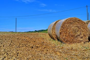 Haystacks, rolled into a cylinders - image gratuit #334741