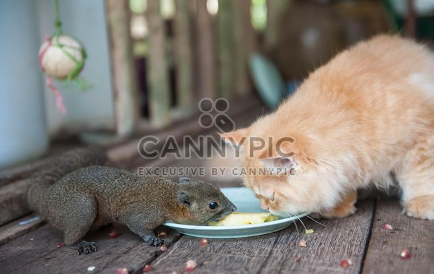 Cat and squirrel eat from one plate - Free image #335031