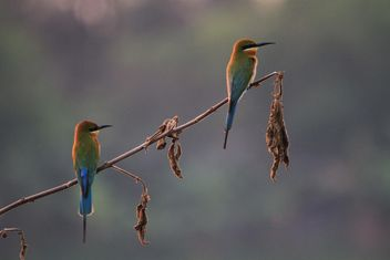 Kingfisher birds on branches - image #337461 gratis