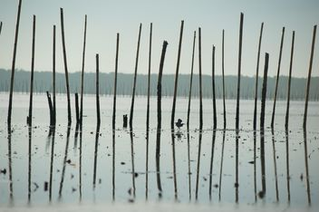 Bird among sticks in sea - image #337531 gratis