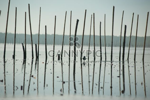 Bird among sticks in sea - Free image #337531