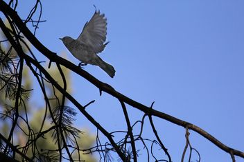 Bird on tree branch - image #337551 gratis