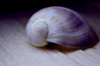 Closeup of beautiful seashell - Free image #338281