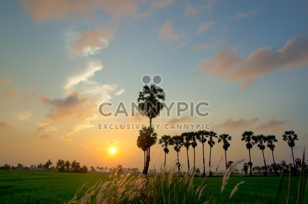 Landscape with palms at sunset - image gratuit #338481