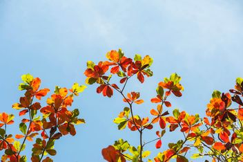 Colorful leaves on tree branch - image #338611 gratis