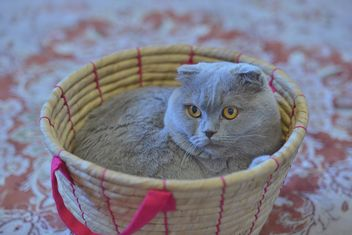 Grey cat in basket - Free image #339201