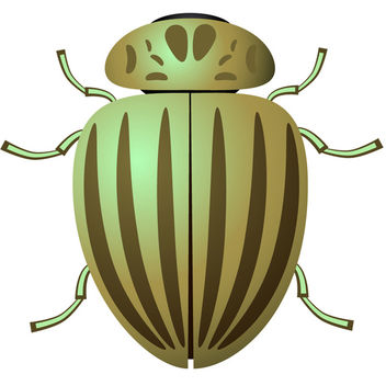 Colorado Potato Beetle - vector gratuit #340211
