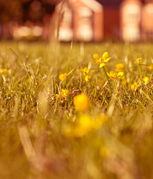 In the middle of the field - image gratuit #341221
