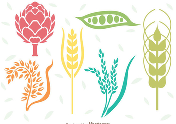 Cereals Plant Set - vector gratuit #342301