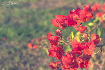 Every flower is a soul blossoming in nature. - Free image #342451