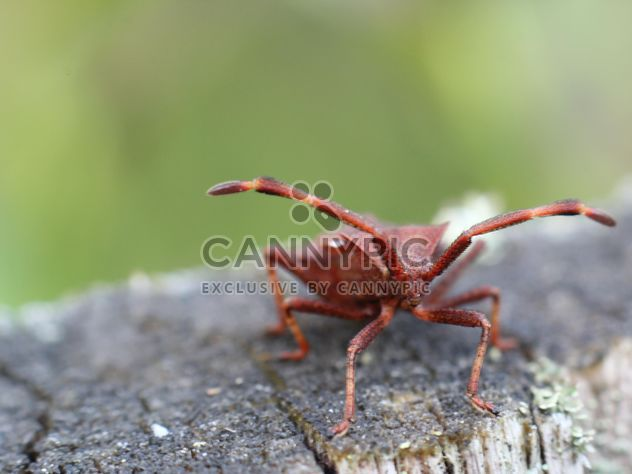 Red insect on a tree stump in the forest - бесплатный image #343911