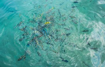 Sea water on Nangyuan lsland in thailand - image #344071 gratis
