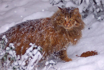 Outdoor cats/dogs need help surviving winter !! - Free image #344411