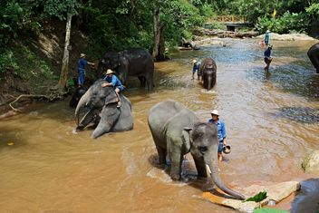 Elephants bathing in river - Free image #344441