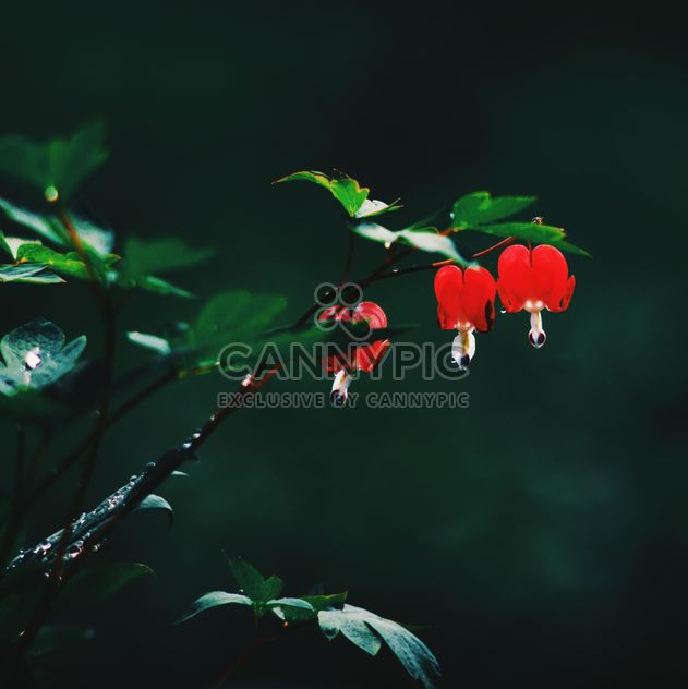 Small red flowers on twig in garden - Free image #345121