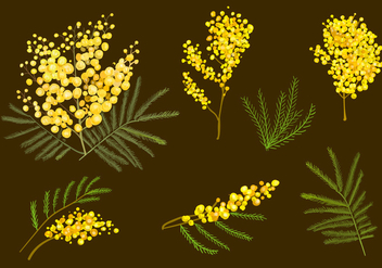 Mimosa Flowers - Free vector #345971