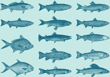 Old Style Drawing Trouts And Fish Vectors - vector gratuit #346331