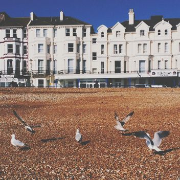 Seagulls and white houses on background, Eastbourne, England - image #346911 gratis