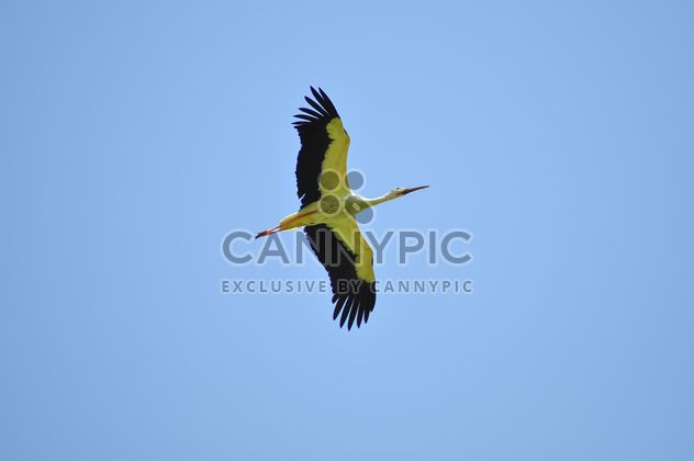 Stork fly in clear blue sky - image gratuit #346941