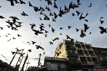 Flock of pigeons flying in city - бесплатный image #346991