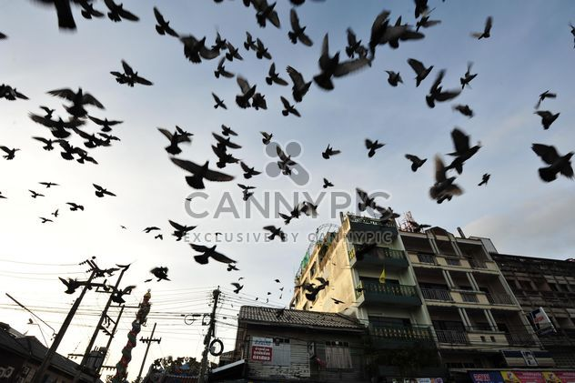 Flock of pigeons flying in city - Free image #346991