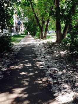 Poplar fluff on path in summer town - image gratuit #348371