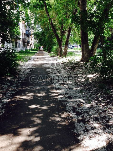 Poplar fluff on path in summer town - Free image #348371