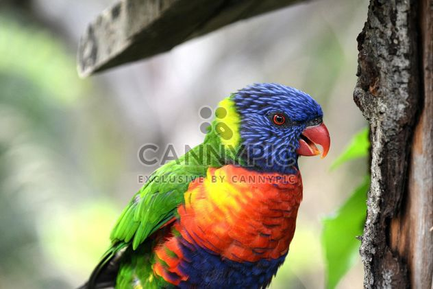 Tropical rainbow lorikeet parrot - Free image #348481