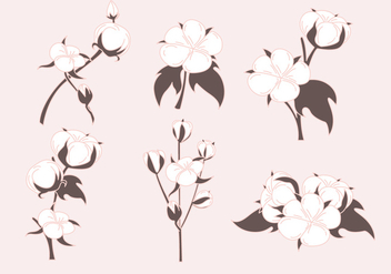 Cotton Plant Vectors - vector gratuit #348871