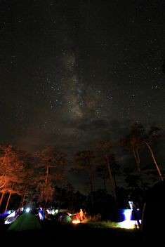 Night sky with Milky Way over tents in forest - image gratuit #348941