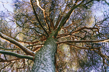 Tree of life - image #351111 gratis