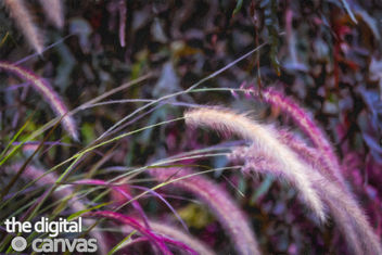 Purple Turfted Grass painting - image gratuit #351311