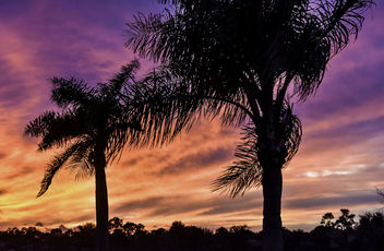 Backyard Sunset Beyond the Palms - image gratuit #351631