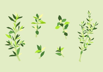 FREE THYME VECTOR - Free vector #352571