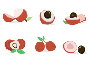 Fresh Lychee Vector - Free vector #353271