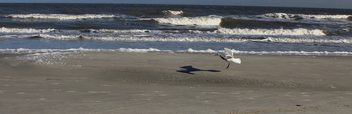 A Seagull and his Shadow - Kostenloses image #359121